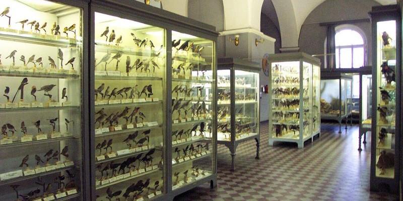Museo Zoológico de San Petersburgo