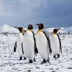 El Museo del Ártico y la Antárdida